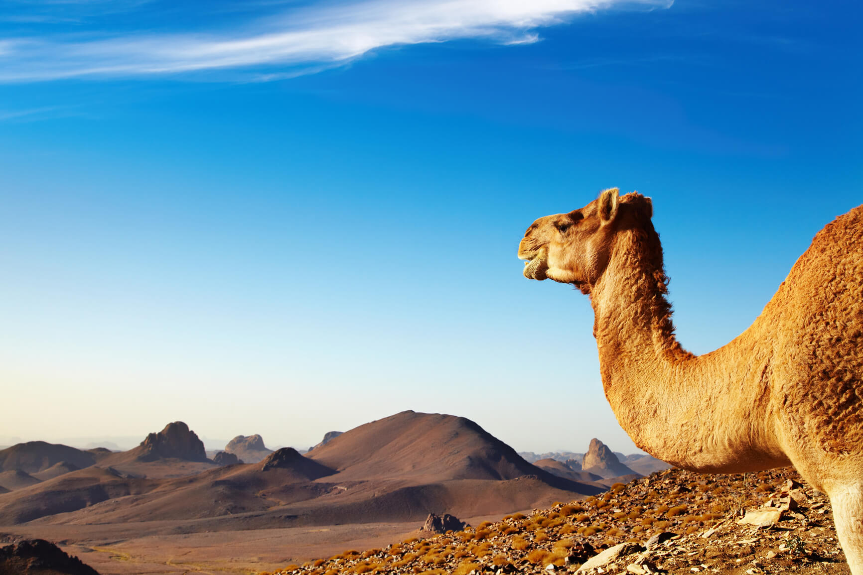 Washington DC to North African cities from only $577 roundtrip
