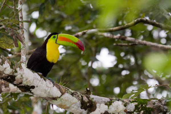 XMAS & NEW YEAR: Toronto, Canada to Costa Rica for only $388 CAD roundtrip