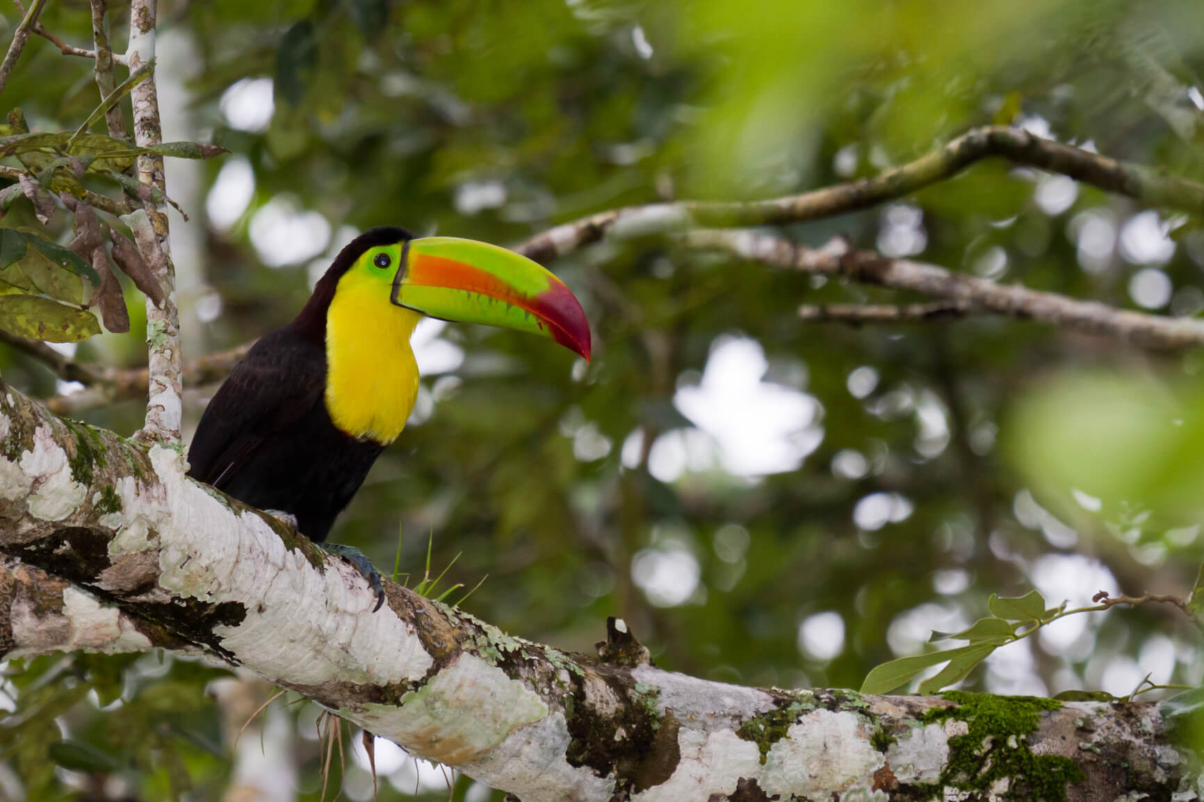 Non-stop from London, UK to Liberia, Costa Rica for only £299 roundtrip