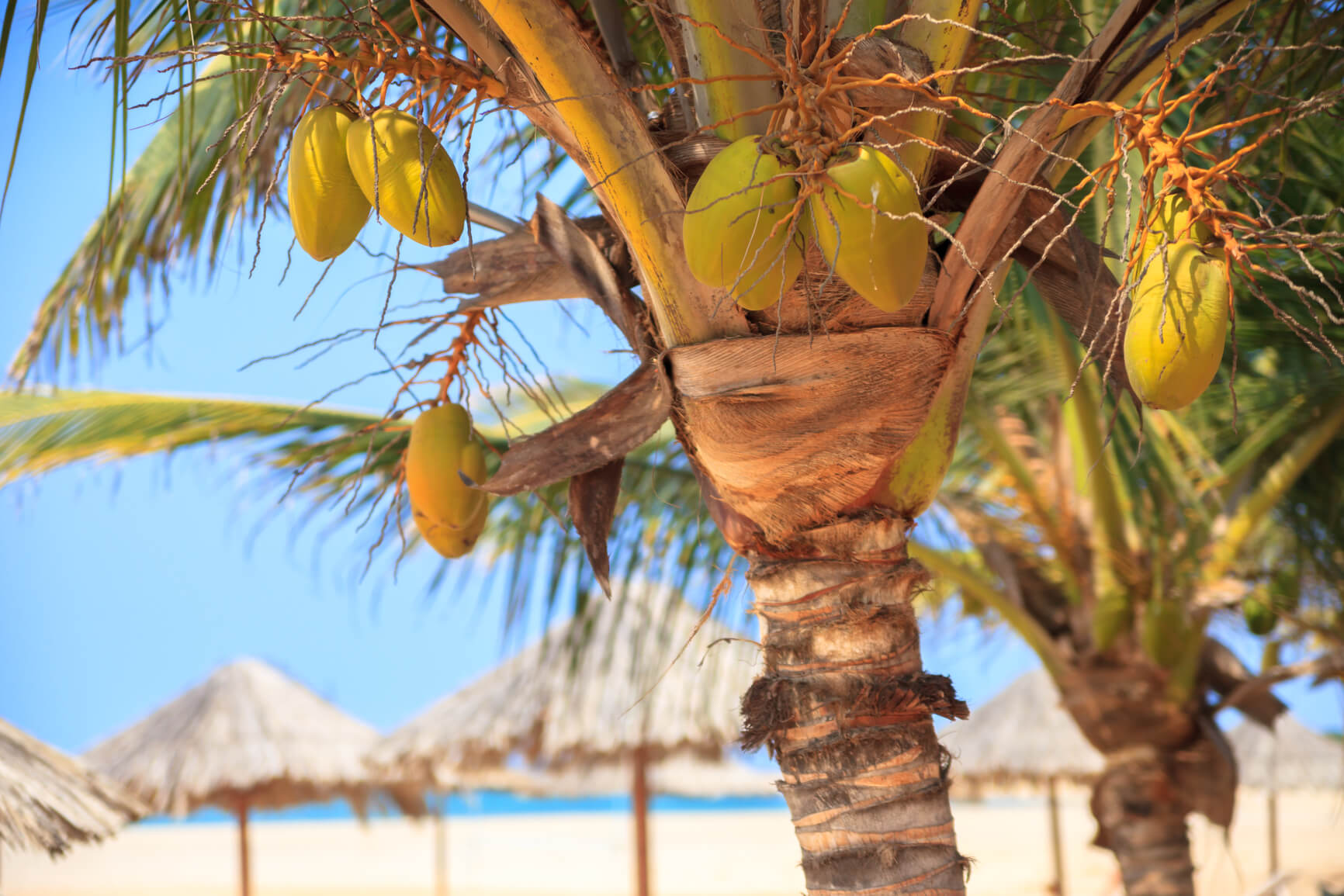 Non-stop from Birmingham or Manchester, UK to Cape Verde for only £171 roundtrip