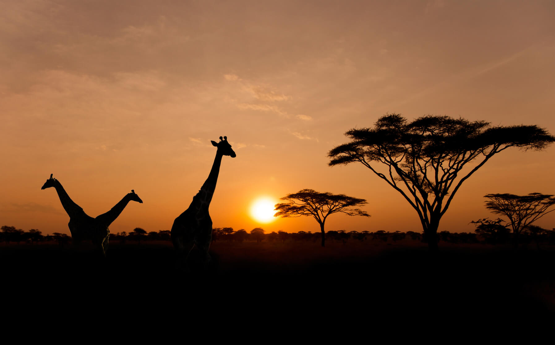 XMAS: French cities to Nairobi, Kenya from only €330 roundtrip (Oct-Dec dates)