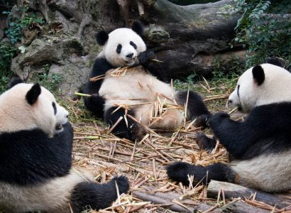 Los Angeles to Chengdu, China for only $306 roundtrip